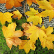 Stock Photo: Beautiful autumn leaves on grass
