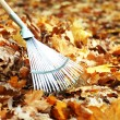 Cleaning of autumn leaves in park — Stock Photo #35451411