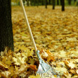 Cleaning of autumn leaves in park — Stock Photo #35451419