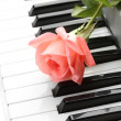 Background of piano keyboard with rose — Stock Photo