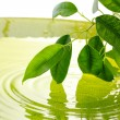 Green leaves with reflection in water — Stock Photo