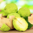 Osage Orange fruits (Maclura pomifera) in crate, on wooden table, on nature background — Stock Photo