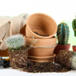 Beautiful cactuses, empty flowerpots and soil, close up — Stock Photo