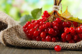 Red berries of viburnum on sackcloth napkin, on bright background — Stock Photo