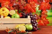 Różnych owoców z pola i oddział rokitnik na stole na jasnym tle — Zdjęcie stockowe