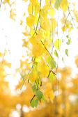 Green and yellow leaves on bright background — Stock Photo