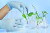 Plants in test tubes. Concept pf science researching. on color background — Stock Photo