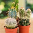 Collection of cactuses, on windowsill — Stock Photo #35521909