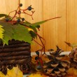 Beautiful autumn leaves with bumps and basket on table on wooden background — Stok fotoğraf