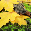 Beautiful autumn leaves near bark on grass — Stock Photo