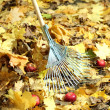 Cleaning of autumn leaves in park — Stock Photo #35522781