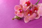 Bellissimo fiore orchidea sul colore di sfondo — Foto Stock