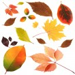 Collection of beautiful colored autumn leaves isolated on white — Stok fotoğraf