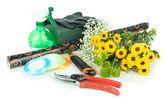Composição com ferramentas de florista isolado no branco — Fotografia Stock