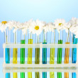 Flowers in test tubes on blue background — Stock Photo #35695679