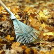 Cleaning of autumn leaves in park — Stock Photo #35695201