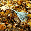 Cleaning of autumn leaves in park — Stock Photo #35695207