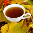 Cup of hot beverage, on yellow leaves background — Stock Photo #35698833