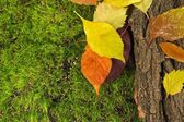 Beautiful autumn leaves with bark on moss background — Stock Photo