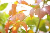 красные листья на ярком фоне — Стоковое фото