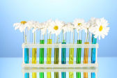 Flowers in test tubes on blue background — Stock Photo