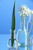 Plants in various glass containers on blue background — Stock Photo