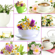 Collage of healthy green tea — Stock Photo #35798719