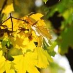 Autumnal background — Stock Photo