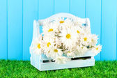 Flowers in wooden box on grass on blue background — Stock Photo