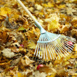 Cleaning of autumn leaves in park — Stock Photo #35836099