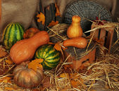 Pumpkins and watermelons — Stock Photo