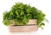 Wooden box with parsley and dill isolated on white — Stock Photo