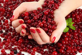 Woman hands holding ripe red cranberries, close u — Stock Photo
