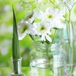 Plants in various glass containers on natural background — Stock Photo #35855551