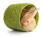 Puszyste foxy królik w wiklinowym koszu na białym tle — Zdjęcie stockowe