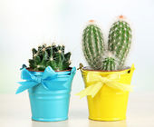 Beautiful cactuses in bright pails on wooden table — Stock Photo