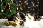 Cute cat lying on carpet with Christmas decor — Stockfoto