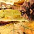 Stock Photo: Beautiful autumn leaves with bump close up