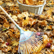 Cleaning of autumn leaves in park — Stock Photo #35995453