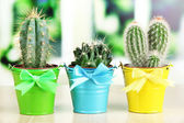 Collection of cactuses in bright pails on wooden windowsill — Stock Photo