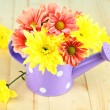 Chrysanthemum flowers in watering can on wooden table close-up — Stock Photo