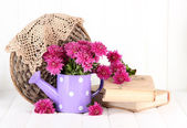 Bouquet of pink chrysanthemum in watering can on white wooden background — 图库照片