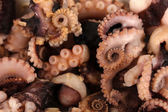 Tentacles of octopus, macro — Stock Photo