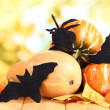Halloween composition on nature background — Stock Photo