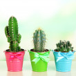 Collection of cactuses in bright pails on wooden table — Stock Photo #36121819