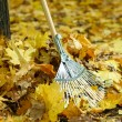 Cleaning of autumn leaves in park — Stock Photo #36123419
