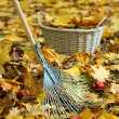 Cleaning of autumn leaves in park — Stock Photo #36123451