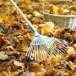 Cleaning of autumn leaves in park — Stock Photo #36123501