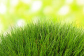 Beautiful green grass on nature background — Stock Photo