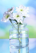 Flowers in bank on natural background — Stock Photo